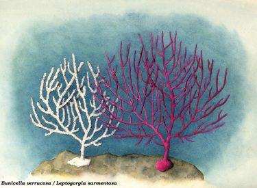 Ilustración Gorgonias